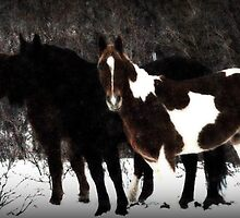Christmas Eve Horses by Ryan Houston
