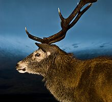 Monarch of the Glen by Andrew Robertson