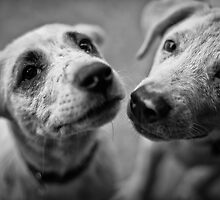 Brothers & Best friends cute dogs by benbdprod