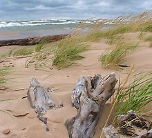 Windy Michigan Beach by Brion Marcum