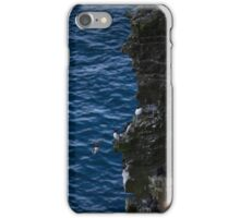 Razorbills nesting on cliffs iPhone Case/Skin