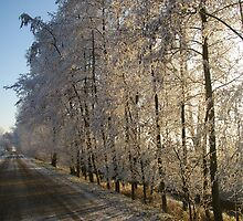 Frosty Trees by aussieusch