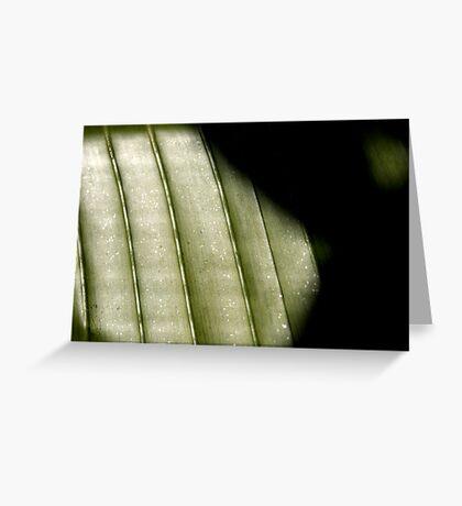 Shadows (Palm Leaf 2007) Greeting Card