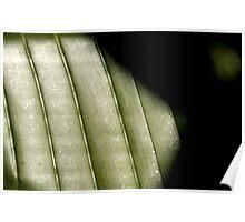 Shadows (Palm Leaf 2007) Poster