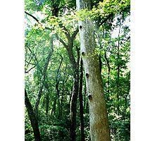 Hole-y Tree Photographic Print