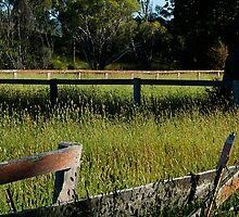 Overgrown paddock by Bryan Cossart