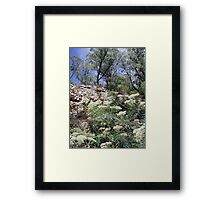 On the Walk to Jaws Cave - Cathedral Ranges Framed Print
