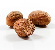 Nutmeg by SeeOneSoul