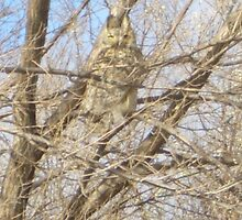 There is a owl in my tree!!! by imwackywomyn