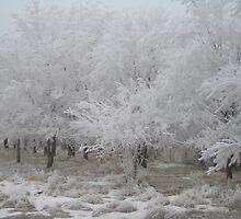 Frosty Forest by imwackywomyn