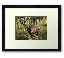 Do you have any idea how much these things weigh? Framed Print
