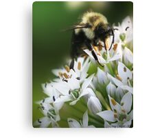 Bumble Bee III Canvas Print