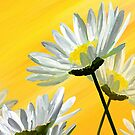 Daisies by saleire
