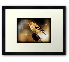 American Goldfinch Watercolor Framed Print