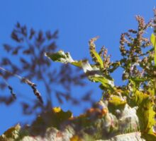 Nature - Plants 01 Sticker
