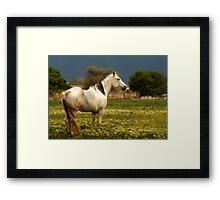 Equine Glow Framed Print