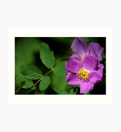 Wild Roses - Hidden Hollow - Sugarhouse, Utah Art Print
