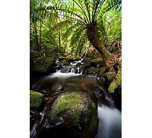 Cement Creek Cascade Photographic Print