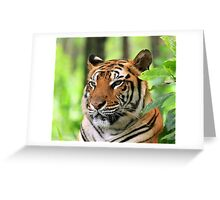 Silent Tiger Greeting Card