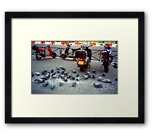 Parisian Pigeon Party, Spring 2000 Framed Print
