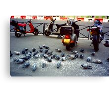 Parisian Pigeon Party, Spring 2000 Canvas Print