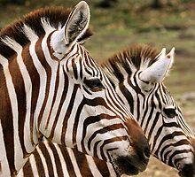 Double Zebra by Ismail Basymeleh