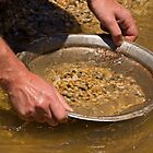 Panning for gold at Sovereign Hill by Darren Stones