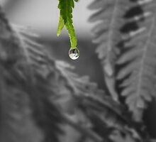 rain by Kathrine