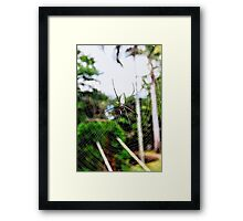 Tree Spider Framed Print