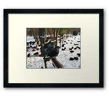 Pigeons Rulers of all they survey Framed Print