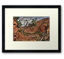 Trees at Zion Framed Print