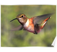 Another Hummer Zipping By Poster