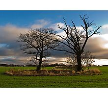 Mr and Mrs Tree Photographic Print