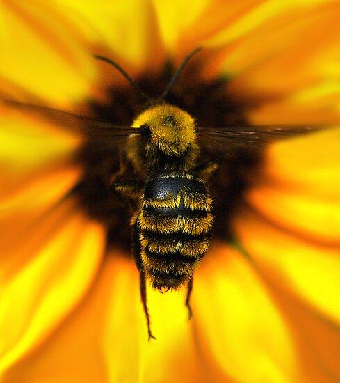 Bee Landing by Ken  Aitchison