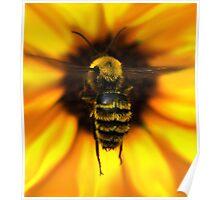 Bee Landing Poster