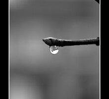 B&W raindrop by Melody Shanahan-Kluth