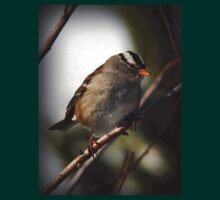 White Crowned Sparrow Winter by Ryan Houston