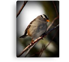 White Crowned Sparrow Canvas Print