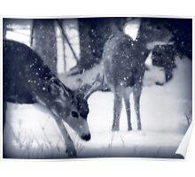 Blue Mule Deer Poster