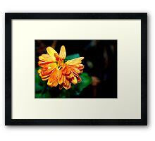 Nectar Retrieval Framed Print