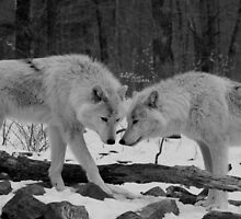 Two Arctic Wolves by kiddruba