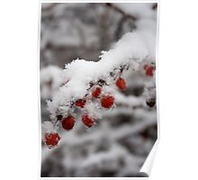Hot Red Berry Cold Poster