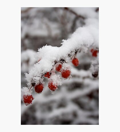 Hot Red Berry Cold Photographic Print