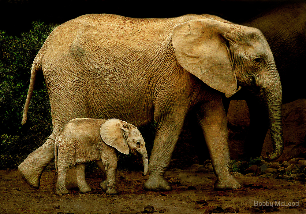 Strolling With Mom by Bobby McLeod