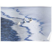 Snowgeese Poster