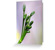 Jonquil seeds Greeting Card