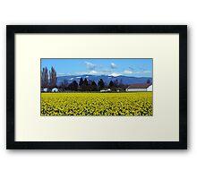 Daffodil Farm Framed Print