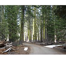 Forest Road Photographic Print