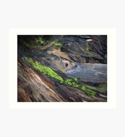 Bark & Moss Art Print