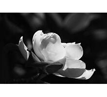 B&W Magnolia 6953 Photographic Print